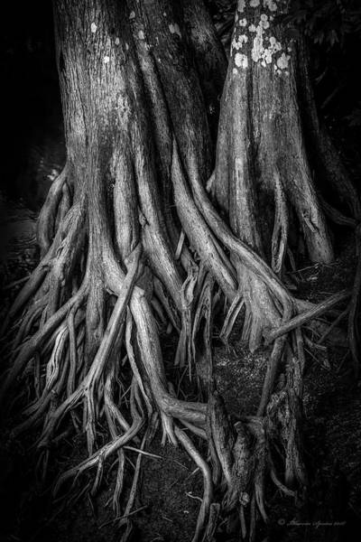 Bald Cypress Wall Art - Photograph - Roots by Marvin Spates