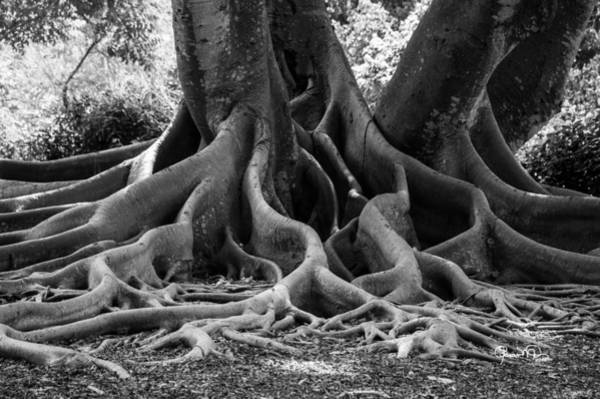 Photograph - Roots Nine by Susan Molnar
