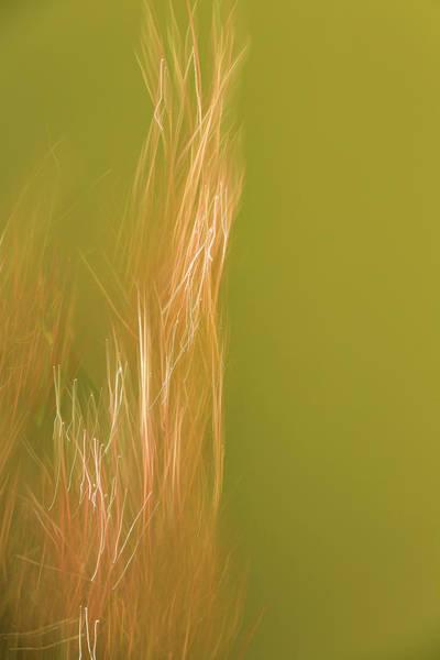 Photograph - Roots Of Light by Deborah Hughes