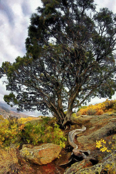 Photograph - Roots Of The Black Canyon - Colorado - Bonsai Tree by Jason Politte