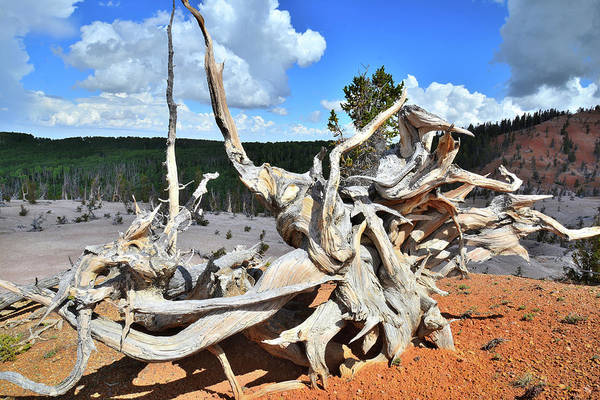 Photograph - Roots On Display by Ray Mathis