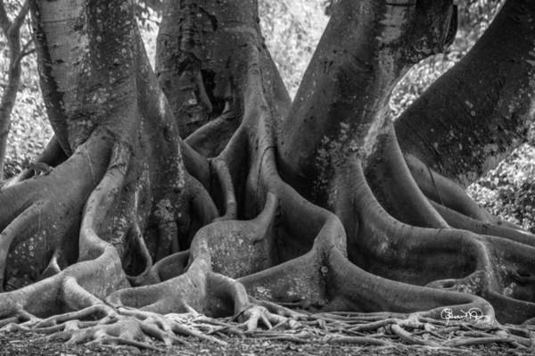 Photograph - Roots Two by Susan Molnar
