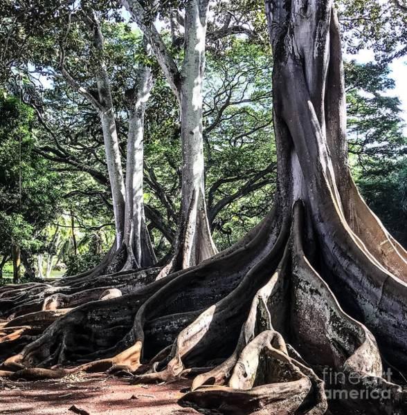 Allerton Garden Photograph - Roots by William Wyckoff