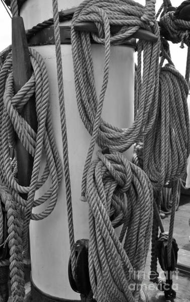 Shipmates Photograph - Rope Hung by Jost Houk