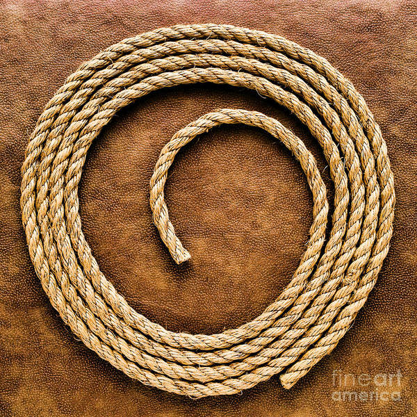 Steer Photograph - Rope On Leather by Olivier Le Queinec