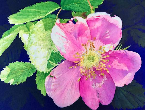 Painting - Rosa Californica by Barbara Pease