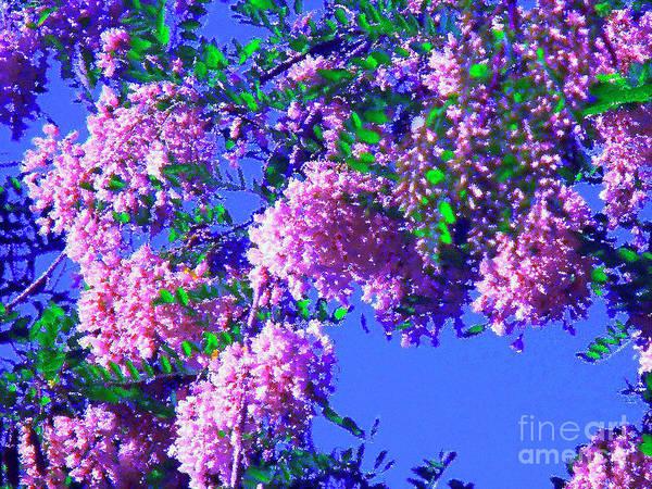 Blooming Tree Mixed Media - Rosa En Azul by Jon Fennel