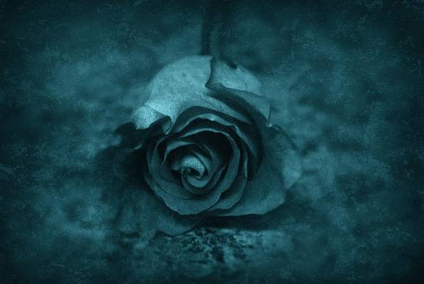Photograph - Rose - Green by Angie Tirado