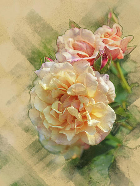 Digital Art - Rose 3 by Mark Mille