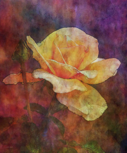 Photograph - Rose After The Rain 3590 Idp_22 by Steven Ward