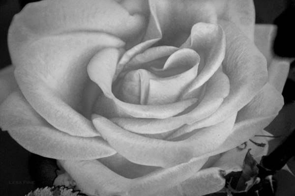 Photograph - Rose Amongst The Thorns by Lesa Fine