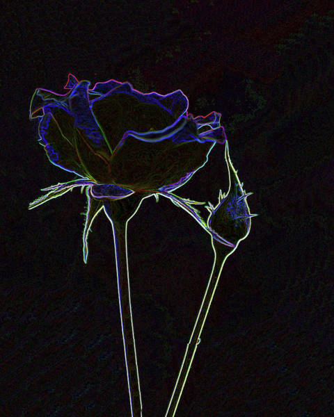 Mixed Media - Rose And Bud by Lesa Fine