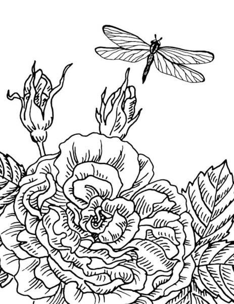 Wall Art - Drawing - Rose And Dragonfly Drawing  by Irina Sztukowski