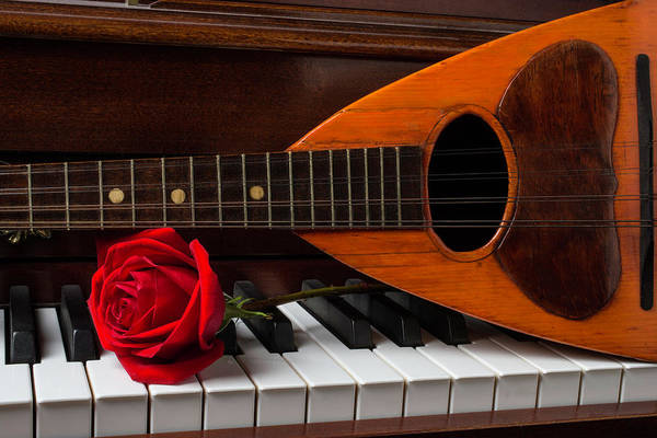 Wet Rose Wall Art - Photograph - Rose And Mandolin by Garry Gay