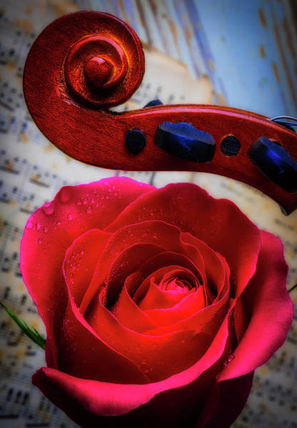 Foilage Photograph - Rose And Scroll by Garry Gay