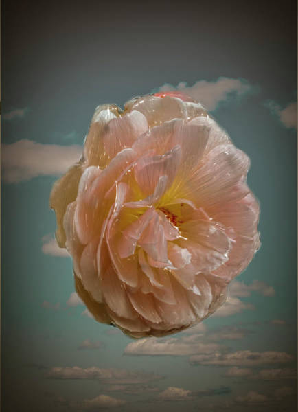Photograph - Rose And Sky #b1 by Leif Sohlman