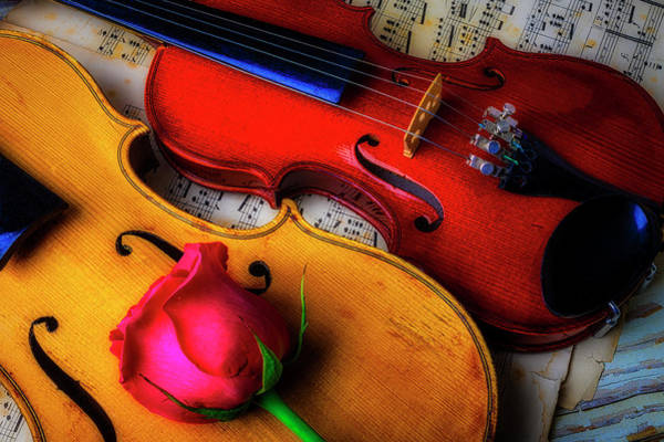 Foilage Photograph - Rose And Two Violins by Garry Gay