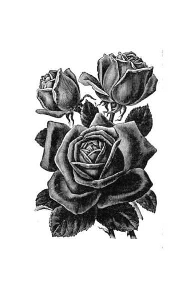 Rose Black Art Print
