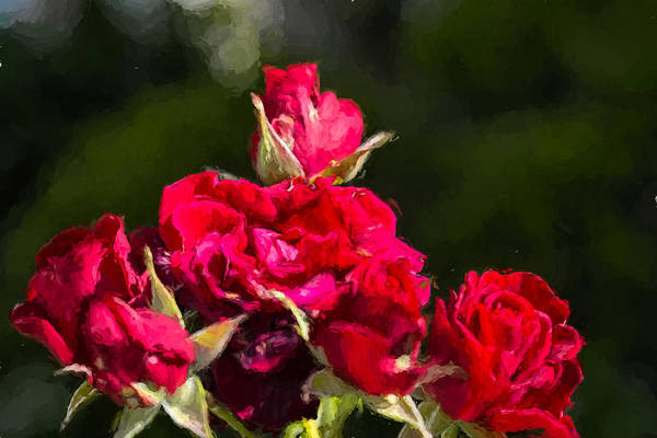 Photograph - Rose Bouquet  by Leif Sohlman