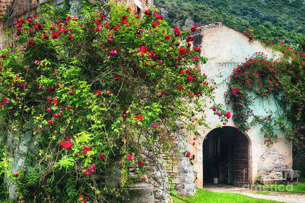 Wall Art - Photograph - Rambling Roses Growing Over On An  Antique Building by George Oze