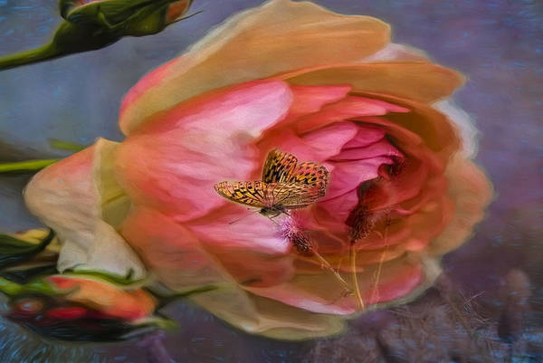 Photograph - Rose Buttefly by Leif Sohlman