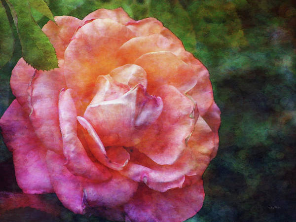 Photograph - Rose Chiffon 1276 Idp_2 by Steven Ward
