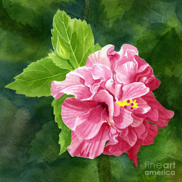 Hibiscus Flower Painting - Rose Colored Hibiscus With Textured Background by Sharon Freeman