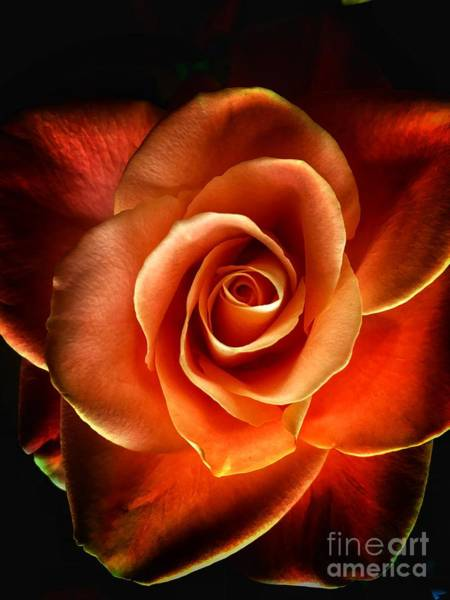 Photograph - Rose by Donald Paczynski