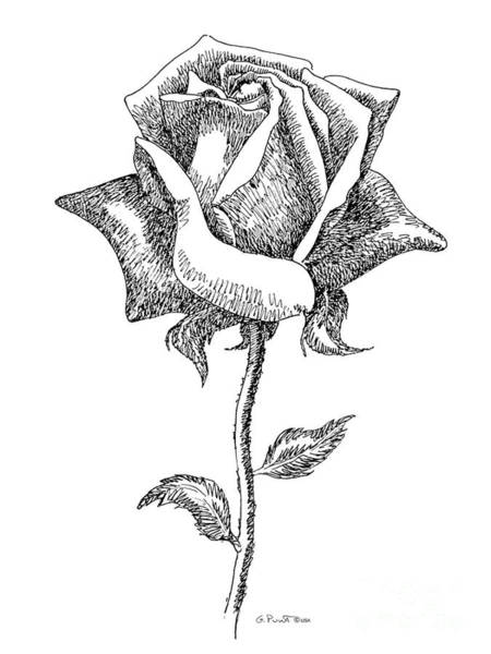 Rose Drawings Black-white 5 Art Print