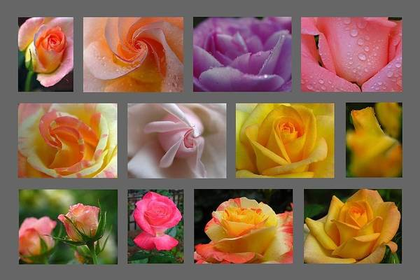 Photograph - Rose Fine Art Collection by Juergen Roth