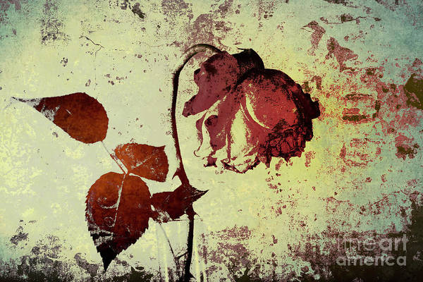 Photograph - Rose Flower In A Vase 2 by Heiko Koehrer-Wagner