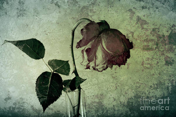 Photograph - Rose Flower In A Vase 4 by Heiko Koehrer-Wagner
