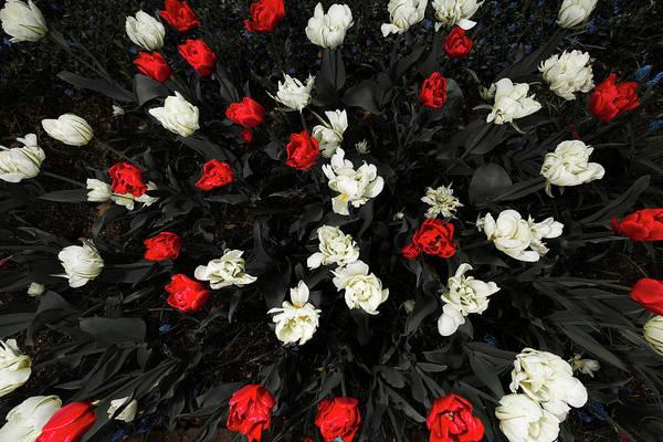 Photograph - Rose Garden 1 by Brian Hale