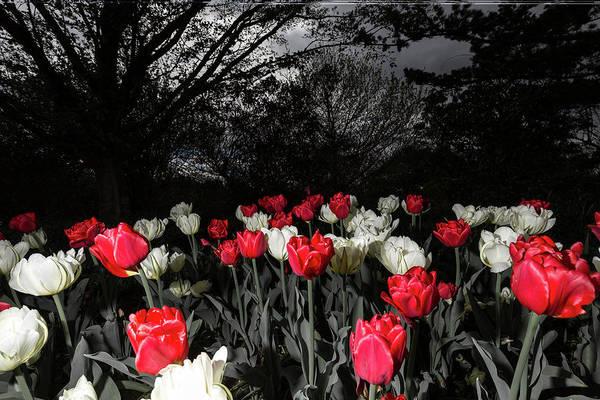 Photograph - Rose Garden 2 by Brian Hale