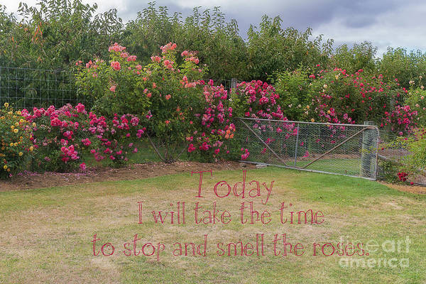 Photograph - Rose Garden by Elaine Teague