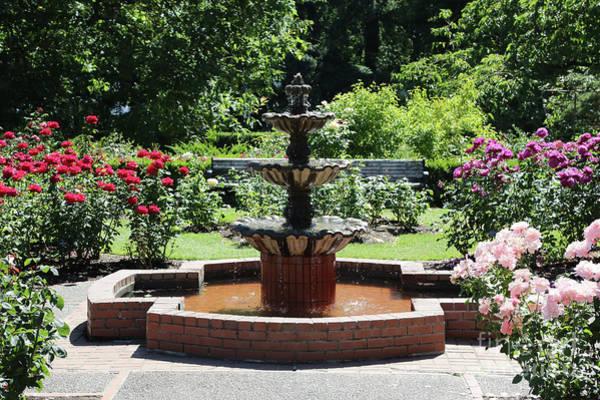 Photograph - Rose Garden Fountain by Carol Groenen