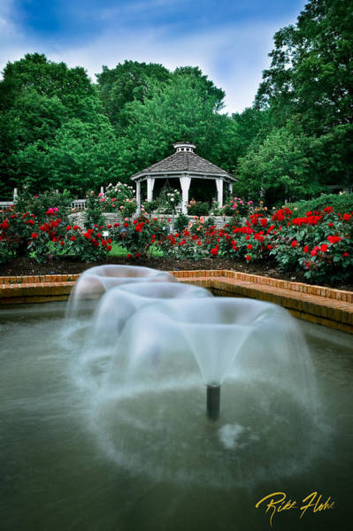 Photograph - Rose Garden by Rikk Flohr