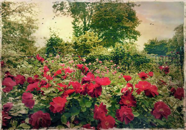 Photograph - Rose Garden Vintage by Jessica Jenney