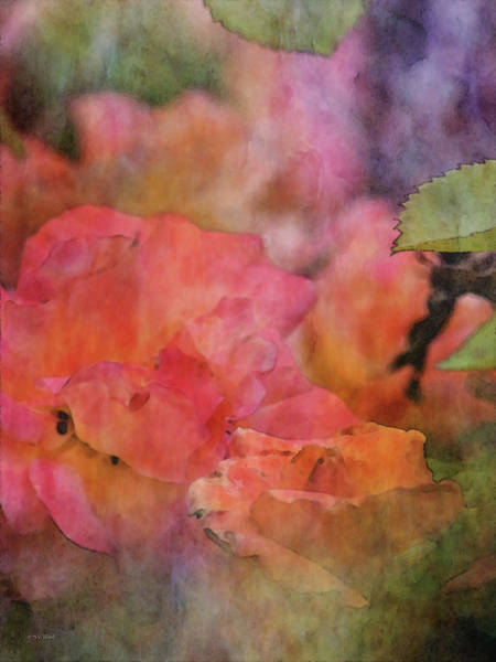 Photograph - Rose Impression 4661 Idp_2 by Steven Ward