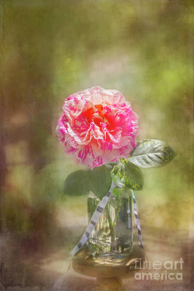 Photograph - Rose In A Jar by Elaine Teague