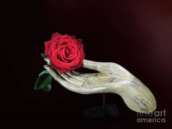 Millinery Photograph - Rose In Hand by Renee Trenholm