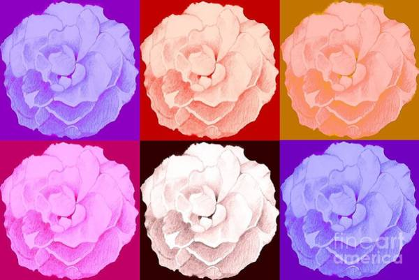 Digital Art - Rose In Six Variations by Helena Tiainen
