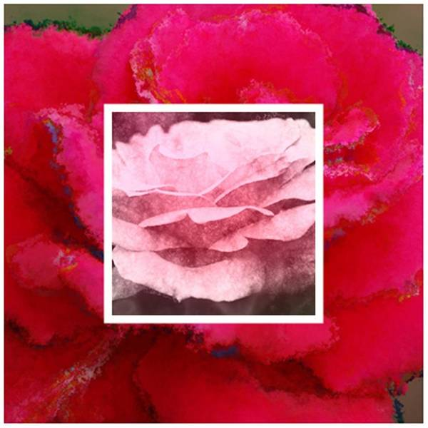 Photograph - Rose Is A Rose by Donna Bentley