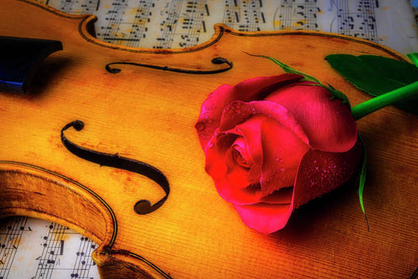 Foilage Photograph - Rose Lasying On Violin by Garry Gay