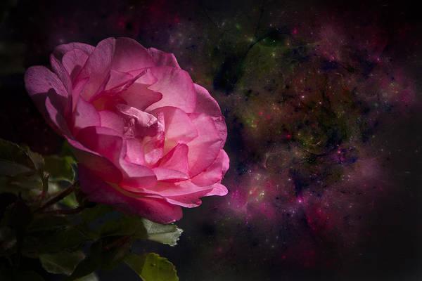 Loftus Photograph - Rose by Michele A Loftus