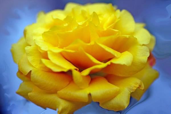 Wall Art - Photograph - Rose Moss Flower by Jim  Darnall