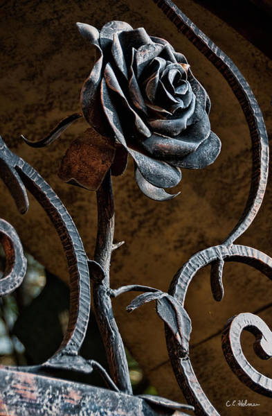 Photograph - Rose Of Iron by Christopher Holmes