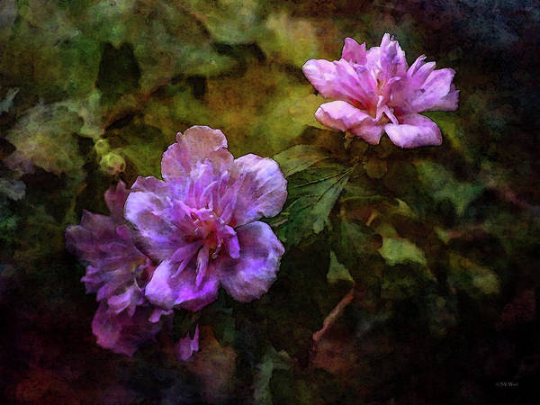Photograph - Rose Of Sharon 3943 Idp_2 by Steven Ward