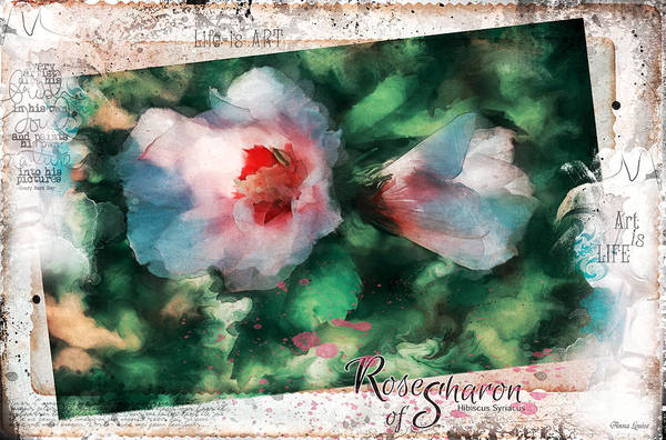 Photograph - Rose Of Sharon Expression by Anna Louise