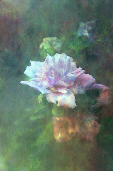 Photograph - Rose Of Sharon Impression 2217 Idp_2 by Steven Ward